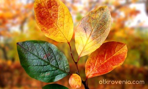 С цялата есенна палитра