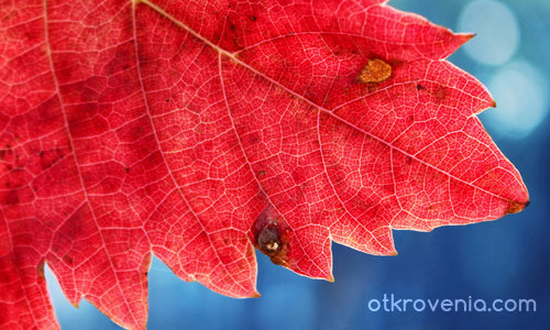 Парченце есен