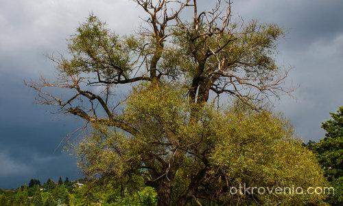 Самотно дърво за посрещане и изпращане - лято