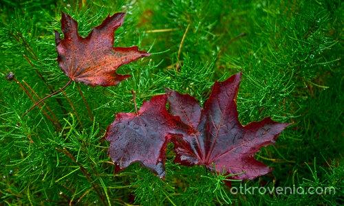 След есенния дъжд