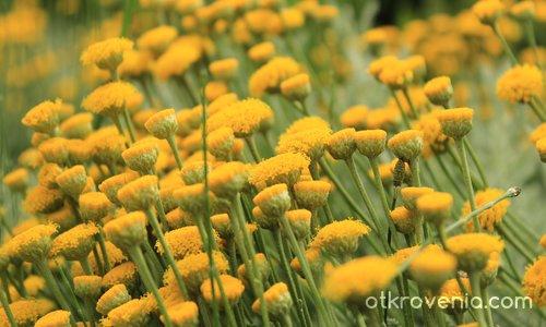 В жълто