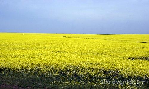 Рапсодия в жълто