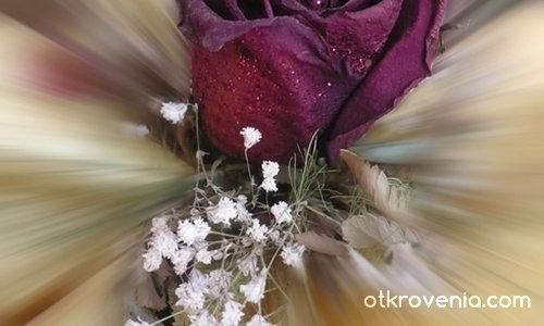 """""""Нека казват, че любовта увяхва като розите! ..."""""""