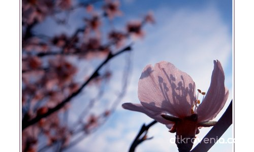 С аромат на пролет II
