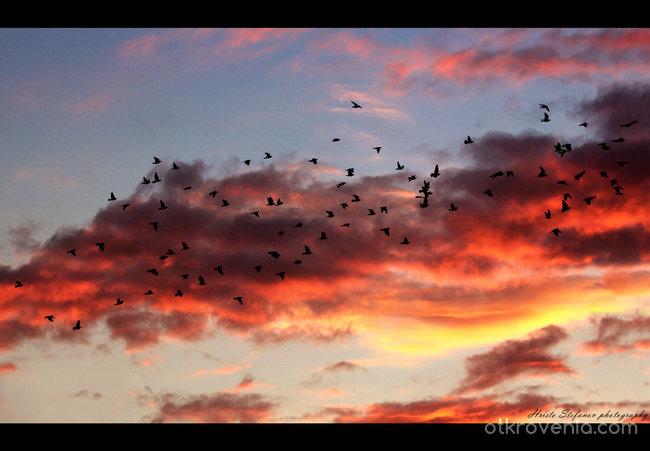 """Полет (""""Душите ни - самотни гълъби..."""")"""