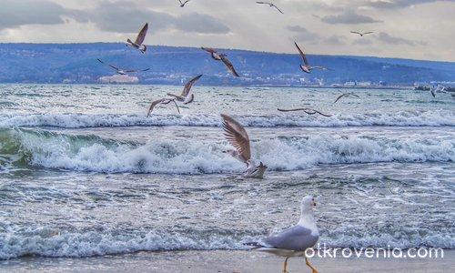 Птичи вълнения