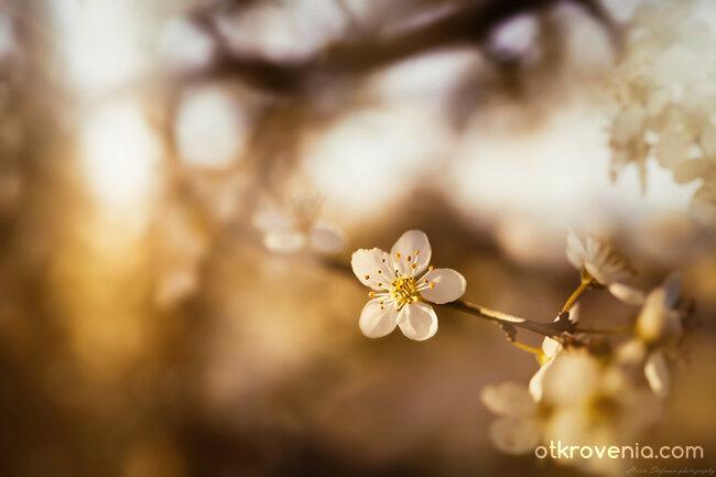 Пролетно усещане