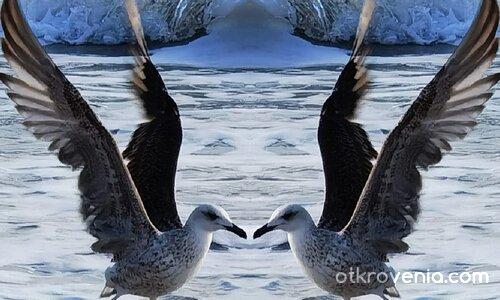 Танцът на крилата
