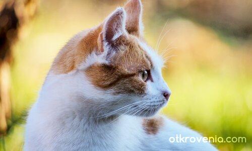 Котешки профил