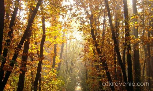 Есен,есен...
