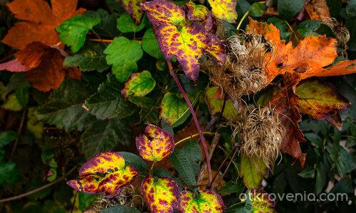 Есенни диагонали