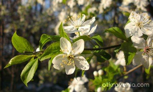 Няма лъжа, пак е пролет