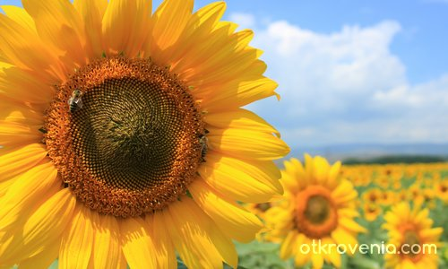 Слънчев ден