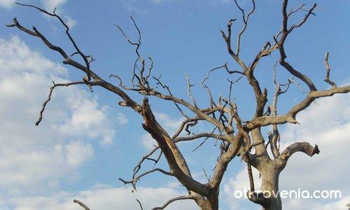Протегни две ръце.../ Дърво в небето2 /