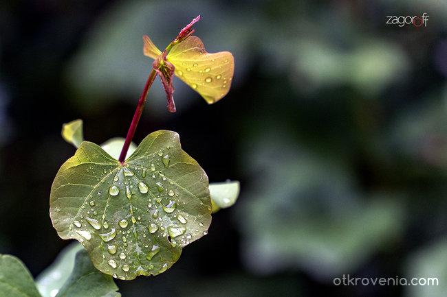 Дъждовен ден