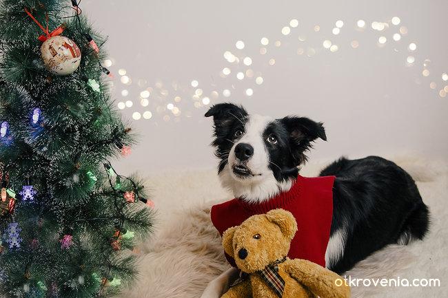 Честита Коледа от мен и Мисти :)