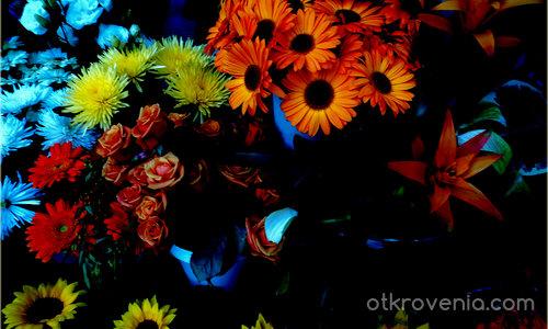 В тъмнината на всяка душа има много прекрасни цветя