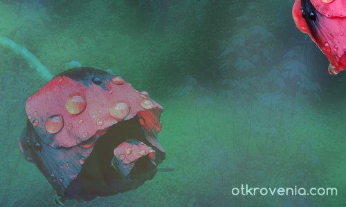 Не вдъхнали на красотата нежния ефир, в суета ще отплуваме...