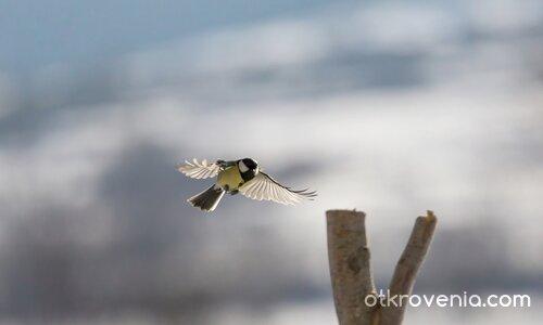 Акробатичен полет