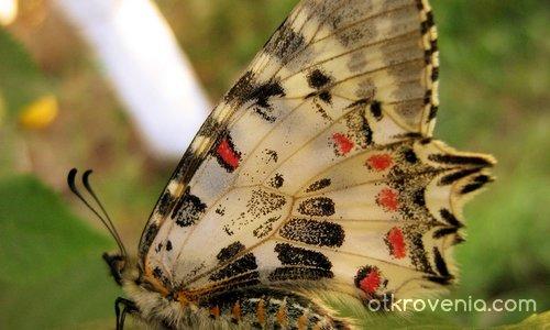 beautyfly ) (