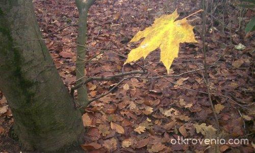 Последно листо