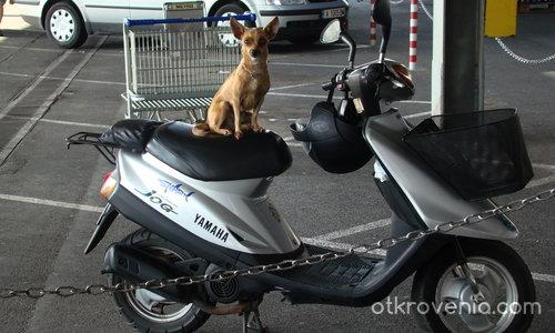 Мотопедистка