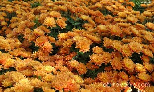 В море от оранжеви мечти
