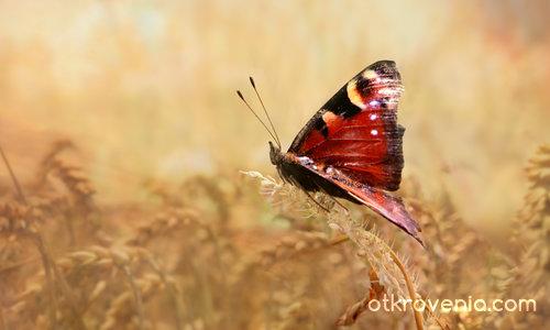 Пеперуден поглед