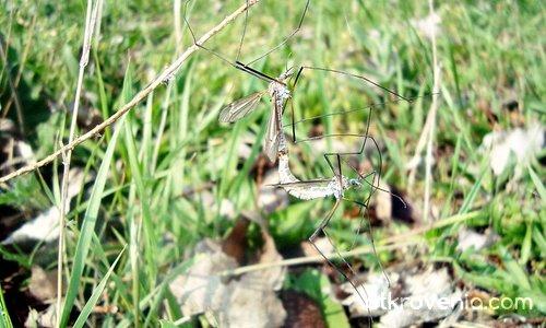 Акробати