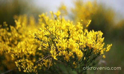 Жълто изобилие