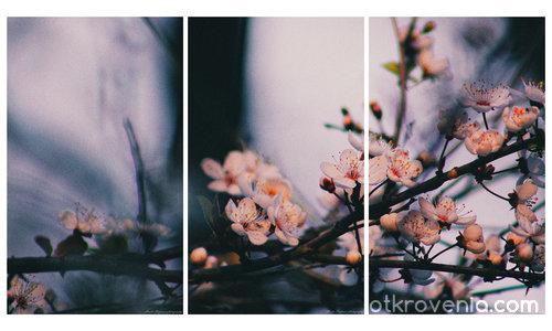 春の俳句 (Пролетно хайку)