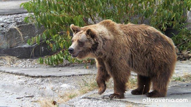 Bear troubles