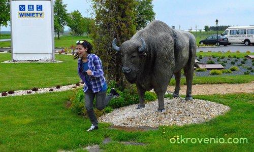 Унгарският бизон и българската девойка