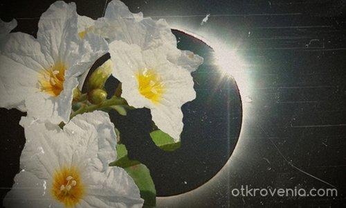 Цвете от тъмната луна