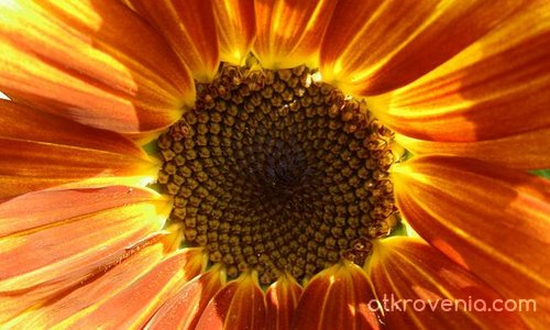 Слънце за всеки...