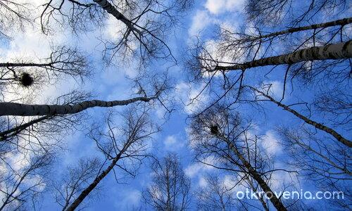 Брези и небе