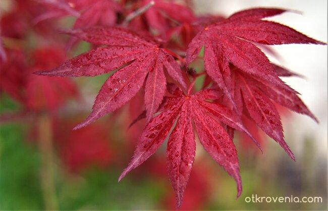 Пролет в червено