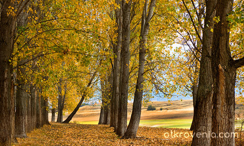 Есента ли почука?