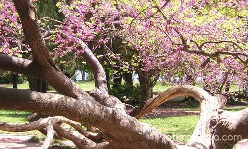 Моето любимо дърво