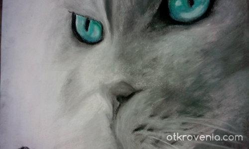 Котешки поглед.
