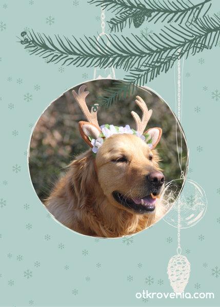 Ново еленче за Дядо Коледа