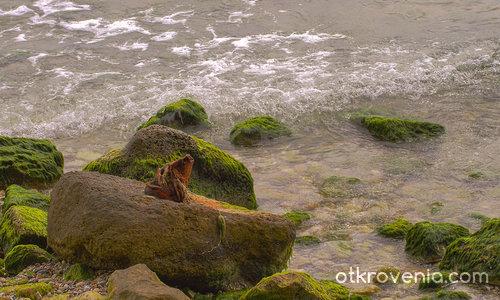 Морски камъни