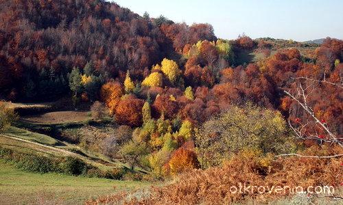 Re:Цветовете на есента_3