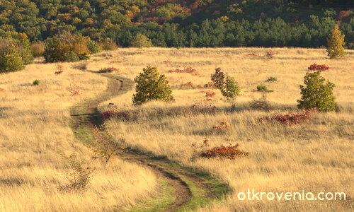 Пътят и светлината (есенна импресия)