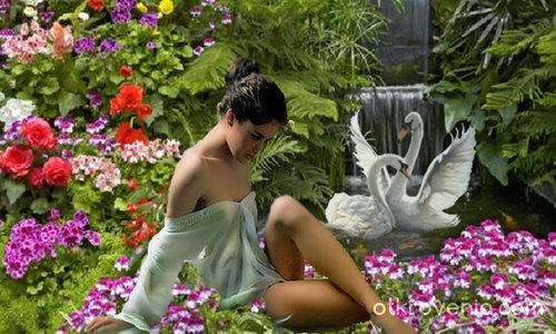 В градината на лебедите