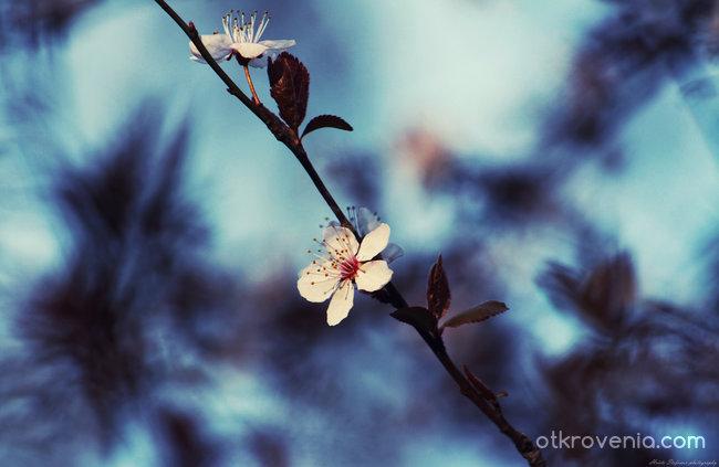 Пролетни етюди