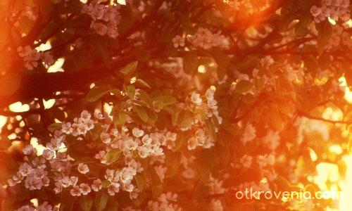 Златна пролет
