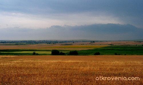 Златните поля