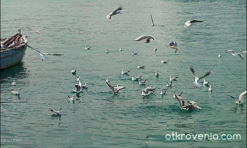 Птиците(но не на Хичкок) :-)