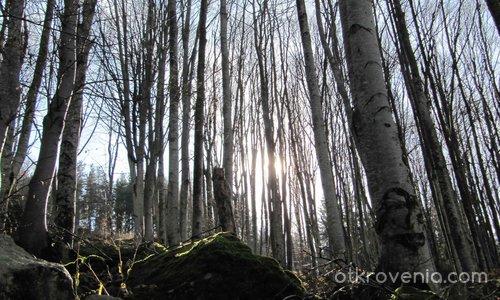 Ще ви разкажа приказка за гората – 1